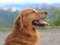 Tips and Tricks to Make Life with Your Pooch That Much Easier