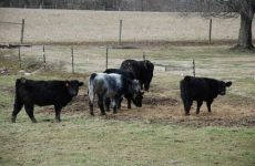 Things That You Need for A Cattle Farm