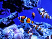 Aquarium Life: How to Make Sure Your Fish are Doing Great