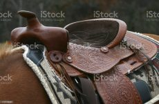 A quarter horse is saddled before a long ride on the farm.
