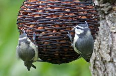 Top Factors to Consider When Buying Food for Birds