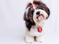 How to Assure the Safety of a Pet?